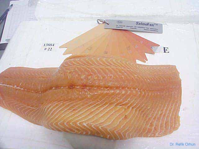 Sciencefish Seafoodsafety